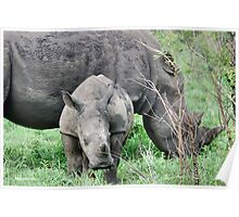 UP CLOSE WITH RHINO BABY AND MOTHER - White Rhinoceros - Ceratotherium sumum  Poster