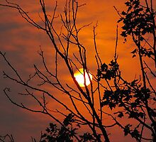 Bushfire Dawn 2 by salsbells69