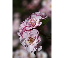 Crabapple Pink Photographic Print