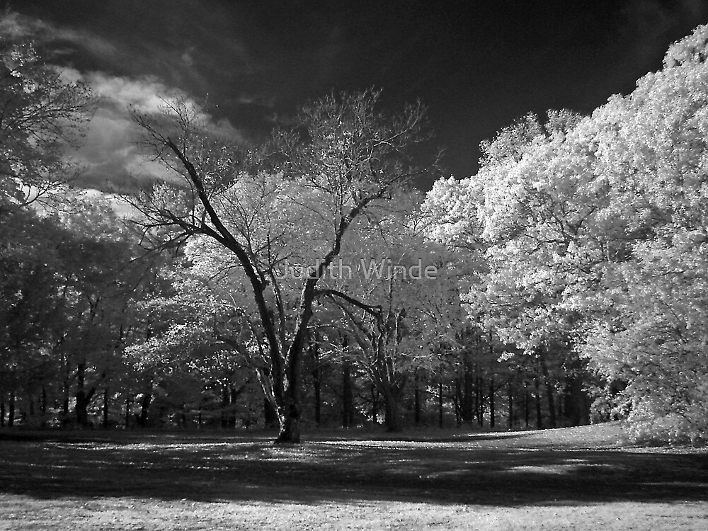 Autumn Foliage in Infrared by Judith Winde