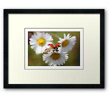 Ladybug almost flying away. Framed Print
