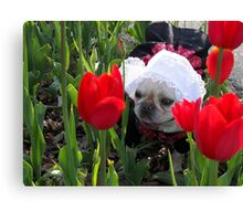 Lily in the Tulips Canvas Print