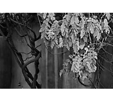 Twisted Autumn Leaves Photographic Print