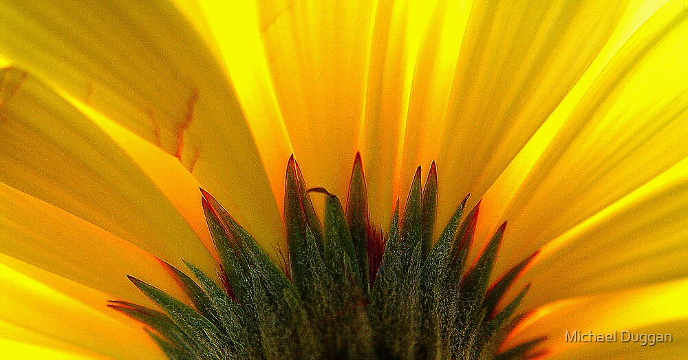 Flower by Michael Duggan