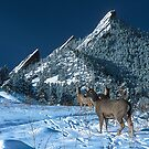 The Flatirons And Deer by Gregory J Summers