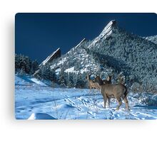 The Flatirons And Deer Canvas Print