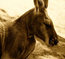 Red Kangaroo in sepia pastels by Lesley Smitheringale