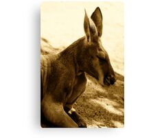 Red Kangaroo in sepia pastels Canvas Print