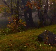 Woodland Stillness by Brandt Campbell
