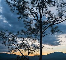 Tree silhouette at dusk - Pai Canyon, Thailand by Guy  Berresford
