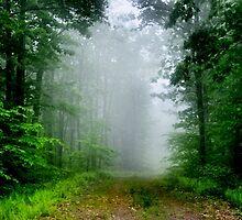 Foggy Morning by Debra Fedchin