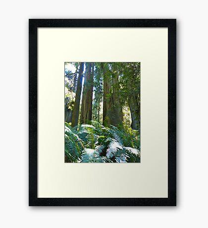 Among the Giants Framed Print