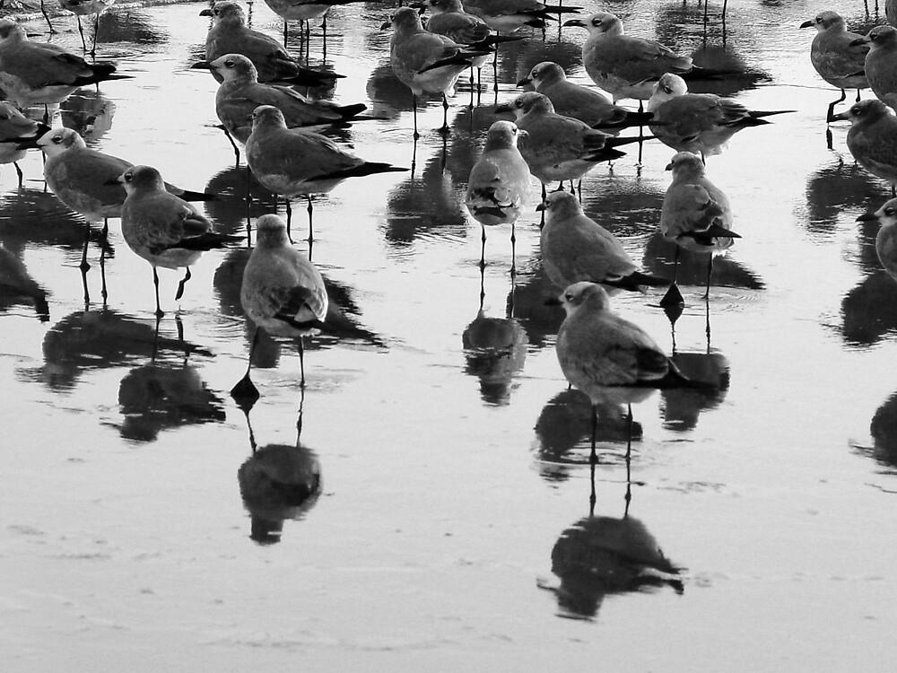 walking birds by catalina acosta