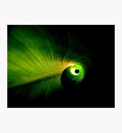 Cannaceae Photographic Print