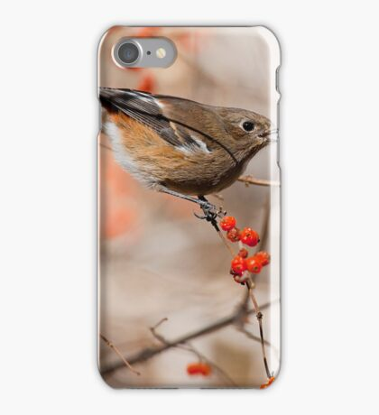 bird - gc iPhone Case/Skin