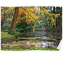 Autumn #2, Alfred Nicholas Memorial Gardens, Victoria, Australia Poster