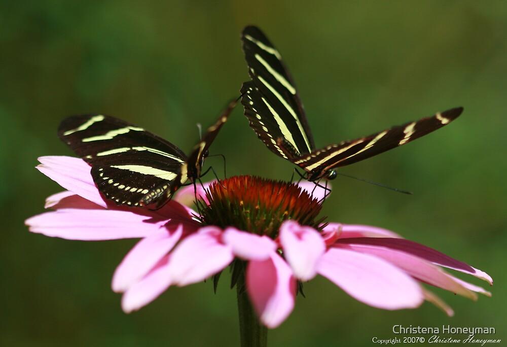 Zebra Longwing Butterfly by Christena Honeyman