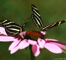 Zebra Longwing Butterfly by Christena Honeyman