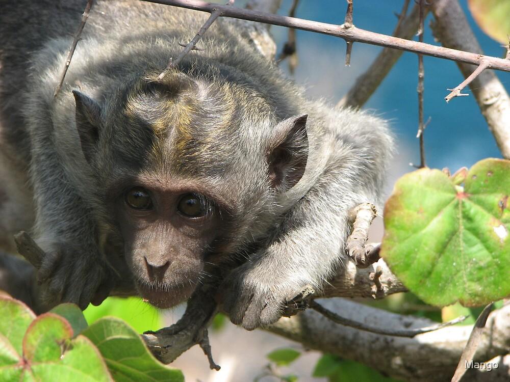 Mesmorised monkey by Mango