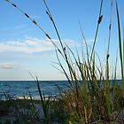 Dune Grass by Woodgate