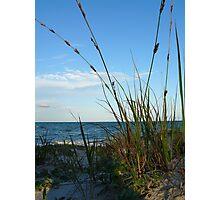 Dune Grass Photographic Print