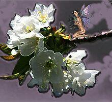 Cherry Blossom Dreams by Greta  McLaughlin