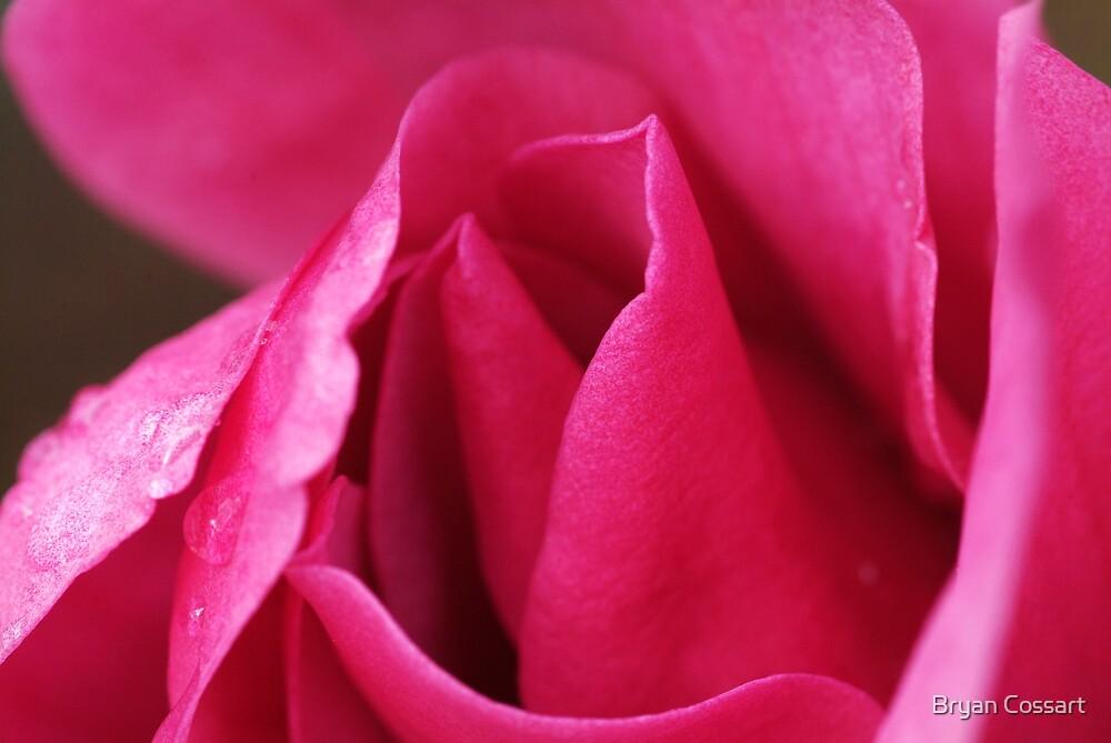Pink Ruffles by Bryan Cossart