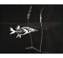 0008 - Brush and Ink - Koi Photographic Print