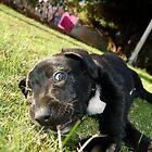 Posing Pup by maverickchild