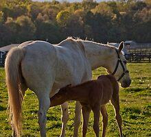 Mama & Her Foal at Feeding Time by Debra Fedchin