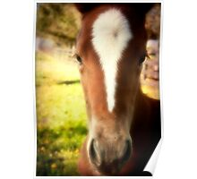 Portrait of a Foal Poster