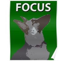 German Shepherd Focus Poster