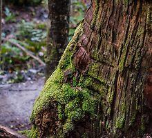 Tahune Tree Tasmania by Russell Charters