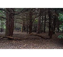 Dark Wood Photographic Print