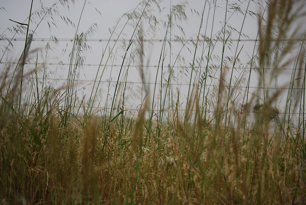 Grasses by Princessbren2006