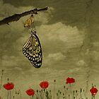 rebirth by Diana Calvario