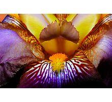 Inside An Iris Photographic Print