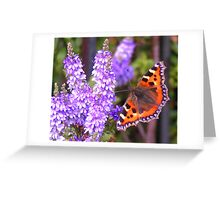 Tortoiseshell Butterfly Greeting Card