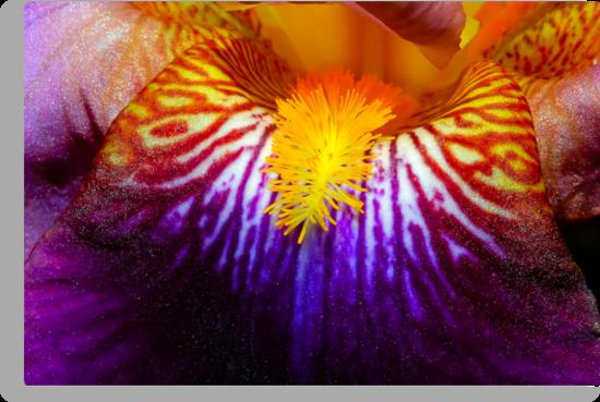 Inside An Iris 2 by MattTworkowski