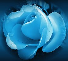 blue rose by cynthiab