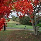On The Green at Jindalee by hans p olsen