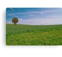 Sea of grass - 1 Canvas Print