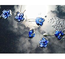 Fallen Delphiniums - Series 1 Photographic Print