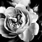 Loving Spirit  by Karen E Camilleri