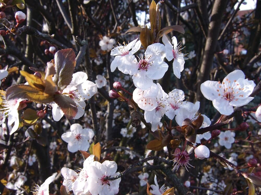 winter flowers by Talvikki