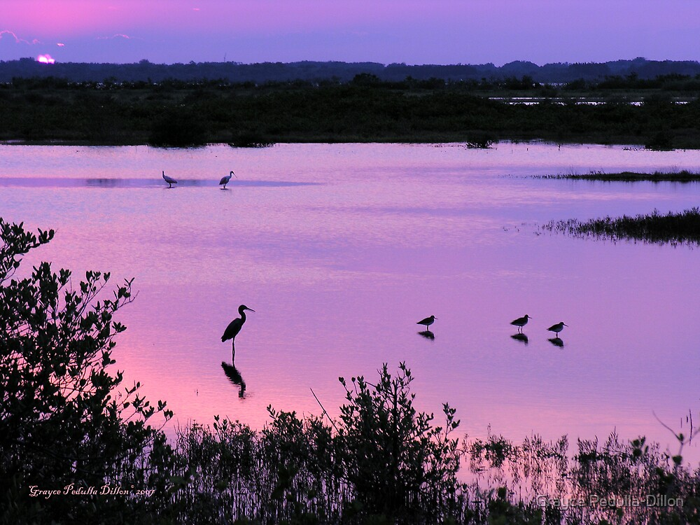 Sunset at the Refuge by Grayce Pedulla-Dillon