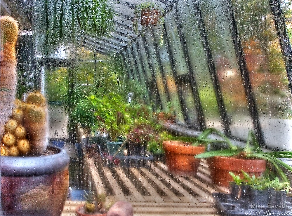 In a greenhouse window by Mike  Savad