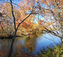 Fall Reflections by Martha Medford