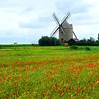 Windmill in poppy field by Elena Elisseeva