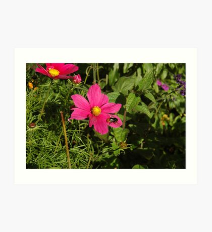 Pink and Bumble Bee Art Print